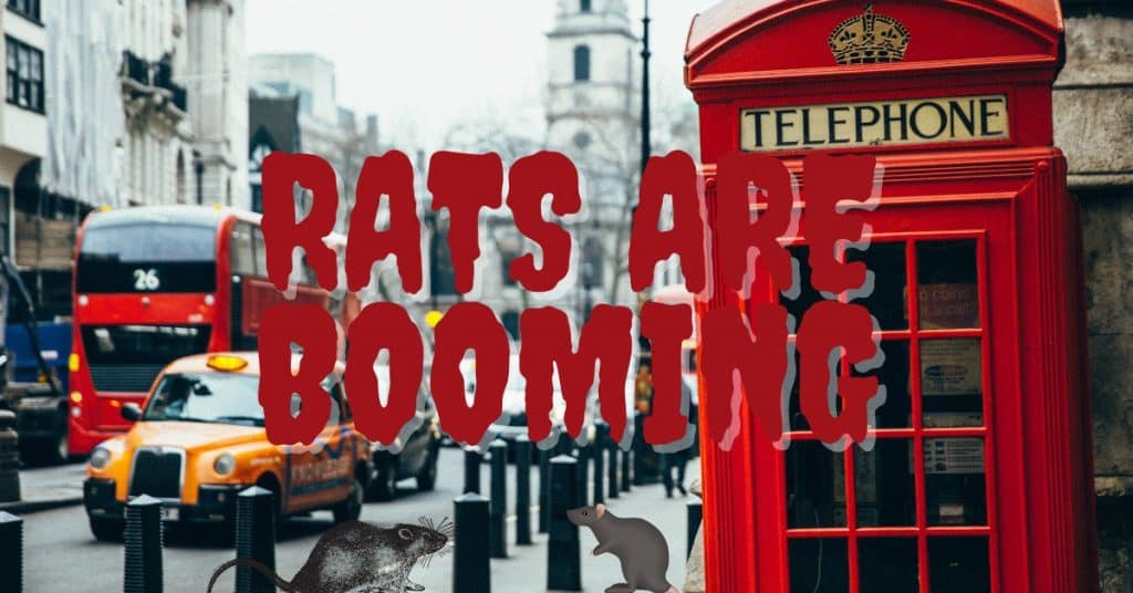 London's Rat Population Booms in Lockdown