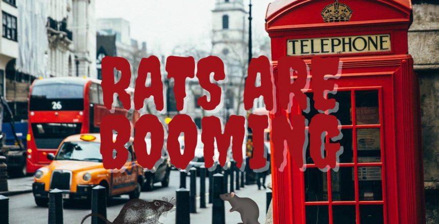 London's Rat Population Booms in Lockdown